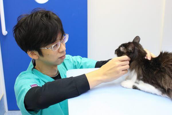 しっかりと話をきいて、丁寧に治療を進める動物病院