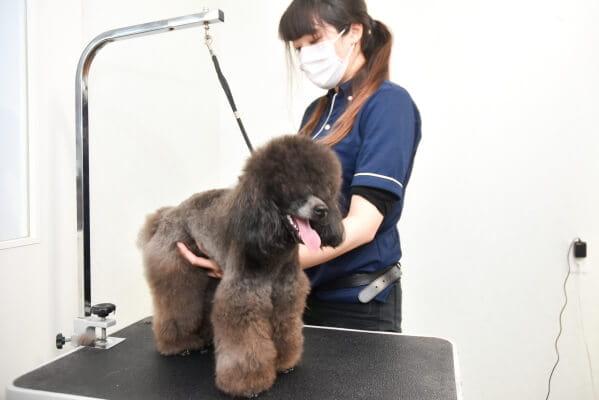 施術前に獣医師が診察! 安心の施術