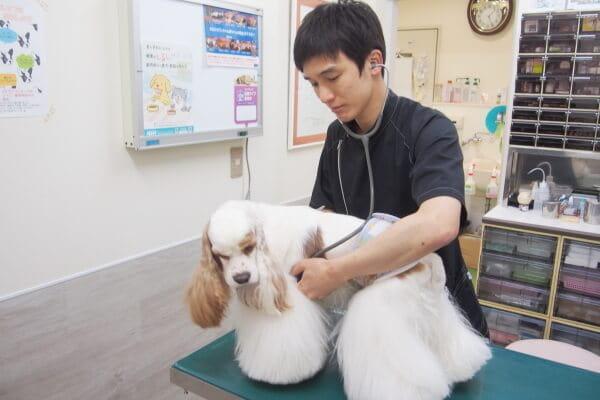 インフォームドコンセントを重視、飼い主さまと共に作り上げる診療を