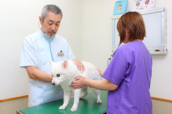 動物病院西谷
