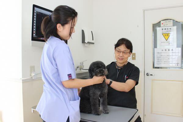 亀山動物病院の診療画像