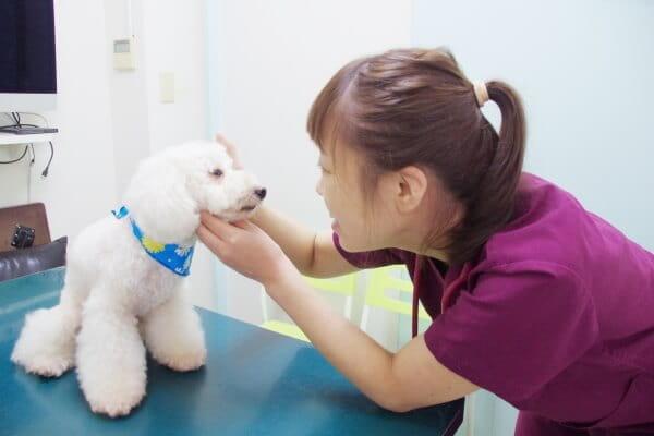 飼い主さまにお話をしっかりとお伺いしたうえで治療を提供いたします