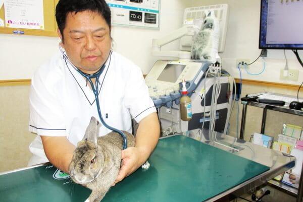 にしだい動物病院