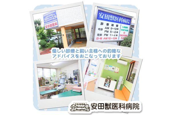 安田獣医科病院