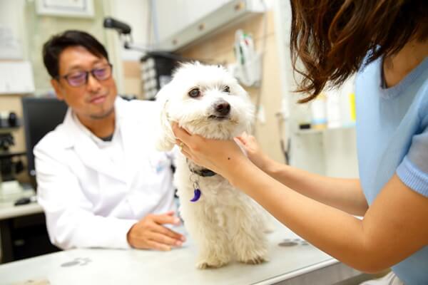 河田動物病院 人物と犬