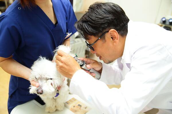 飼い主さまの心に寄り添う獣医療