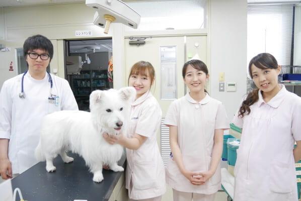 吉永動物病院(トリミング)