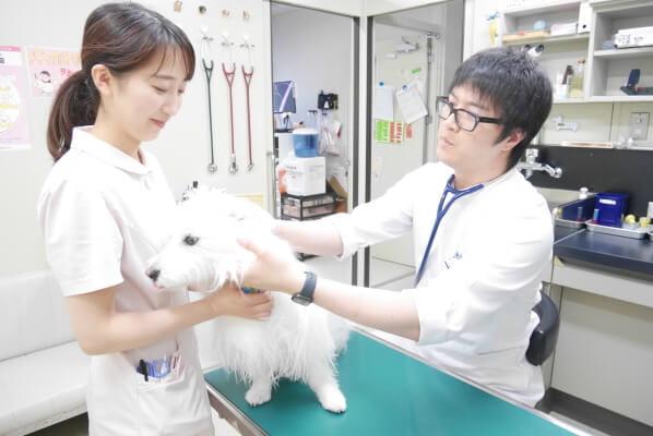 動物の再生医療はお任せください