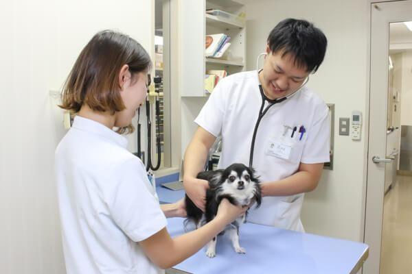 品川区でおすすめの動物病院6選!口コミあり