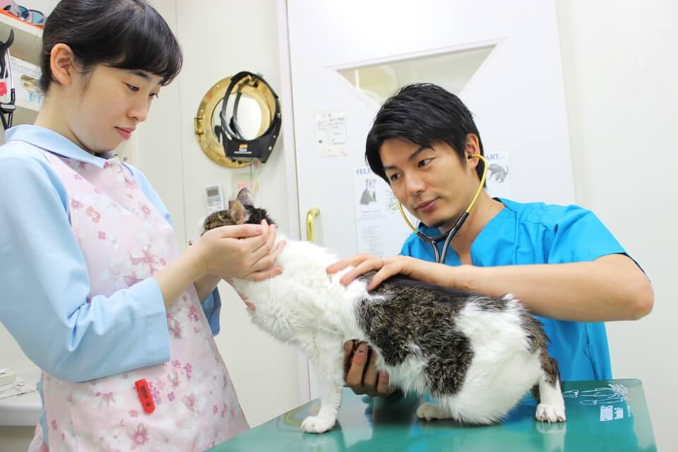 武井動物病院