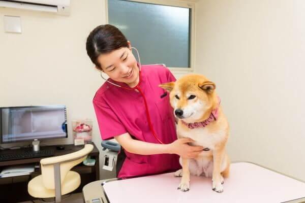 大切な家族であるペットの一生を支えるホームドクターとして