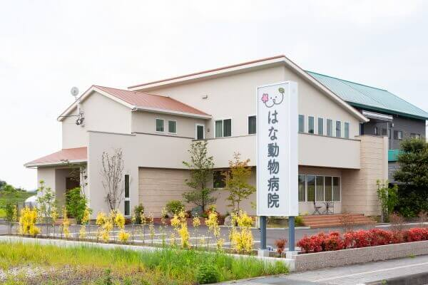 ハナ 動物 病院