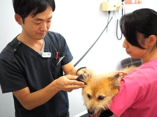 ペットと飼い主さまの心に寄り添った診療を大切に