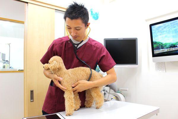 飼い主さまと一緒に考える診療を意識!