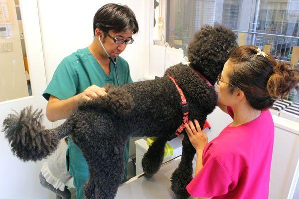 得意分野は外科治療、精度の高い検査機器も導入!