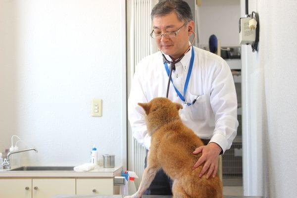 土曜・日曜・祝日にも診療可能な人気の動物病院