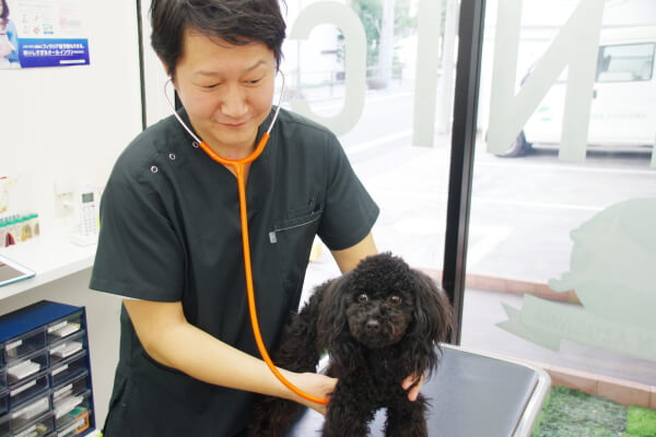 DOG TOWN AZUSAWA CLINIC
