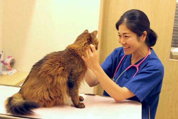 そら動物病院診察中