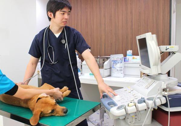 こととい通り動物病院