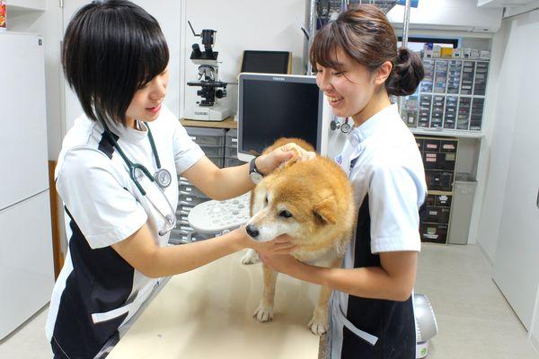 馬場動物病院の診療方針