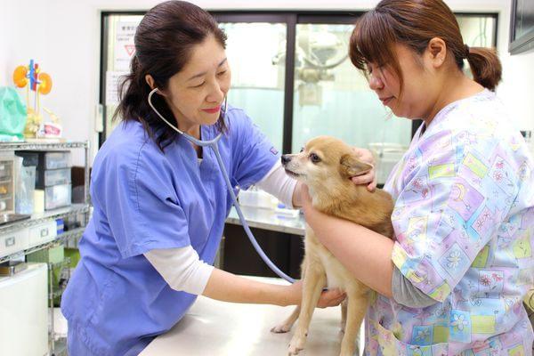 アメリカン動物病院の診療方針