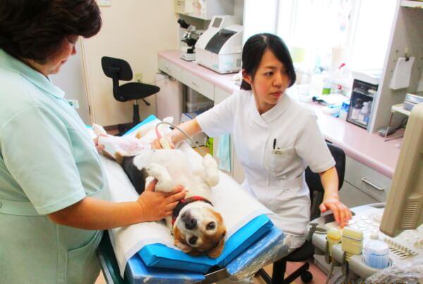 グランママ動物病院