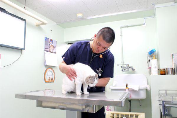 ドクターオザワ動物病院 八王子病院