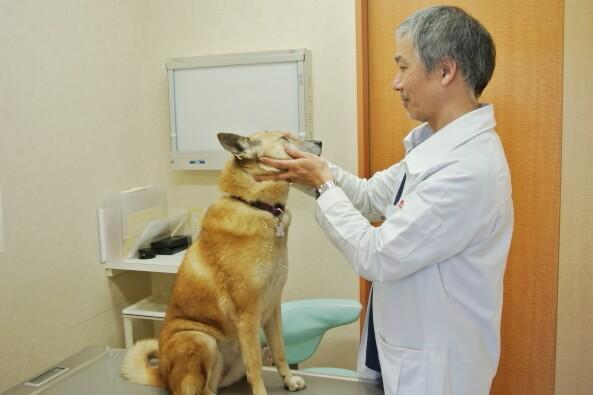 カーサ動物病院