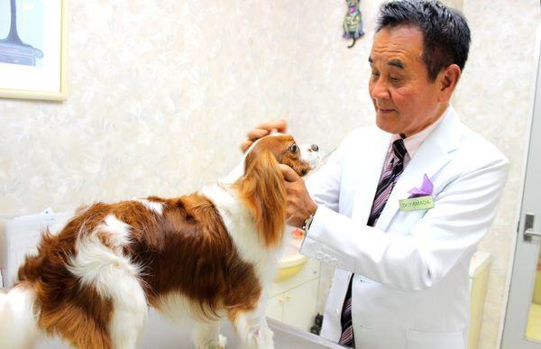 山田動物病院 人物