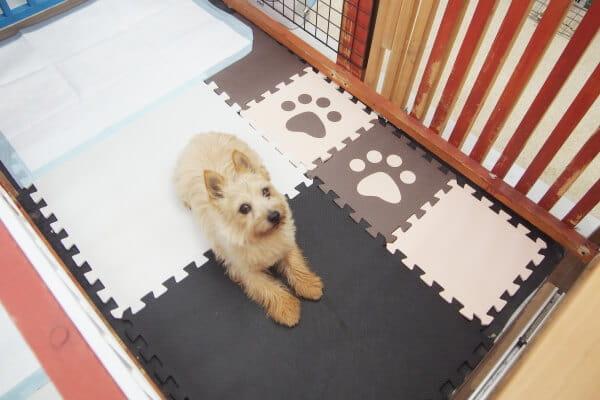 Dog ciTy(ホテル)