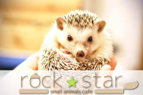 小動物カフェ ROCK STAR(ホテル)
