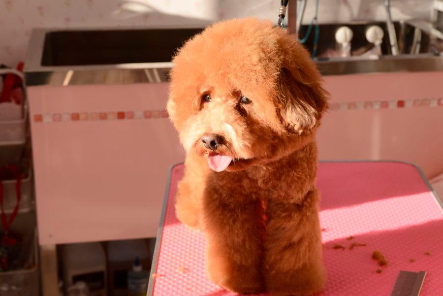 Dog salon nico [ペットホテル]