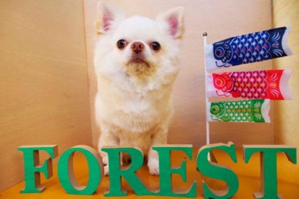 DOG SALON FOREST [ペットホテル]