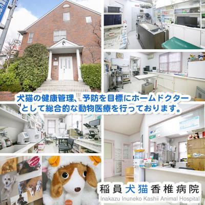 稲員犬猫香椎病院