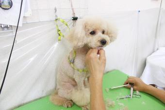 愛犬の美容室 ベンジー