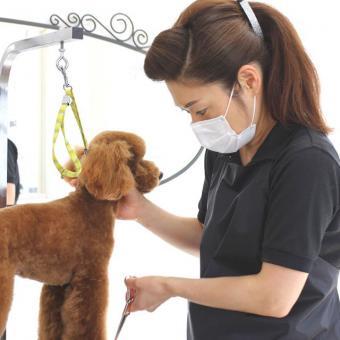 Dog salon Ange(ドッグサロン アンジュ)