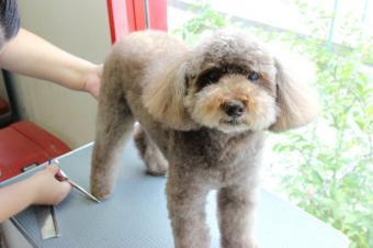 Doggy Wash Twinkle