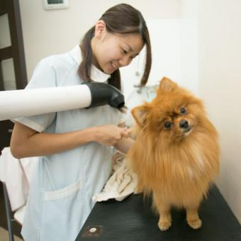 西ヶ原ローズ動物病院(トリミング)