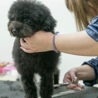 Dog Salon SINAMON