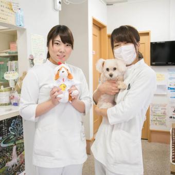新宿犬猫病院(トリミング)