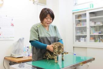 ペットサロンBEANS(動物鍼灸治療院)
