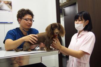 てづか動物病院