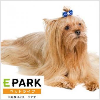 DOG STATION 花小金井店