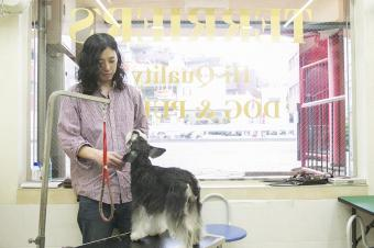 DOG's PRO SHOP TERRIER'S(テリアス)目黒店