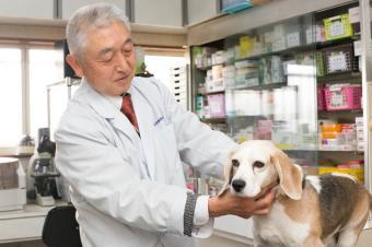 坂本動物病院