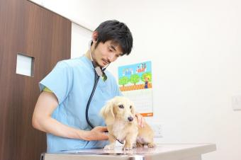 BiBi犬猫病院
