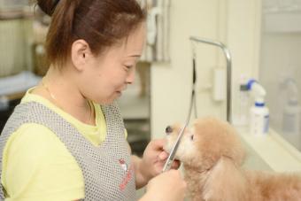 Dog Beauty プレイス