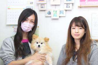 Dogking 大船店