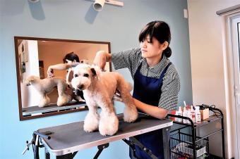 Dog Salon room micc