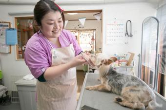ペットグルーマーズ・スタジオ Doggie&Kitty(ドギー&キティ)